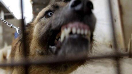 brescia cane clochard